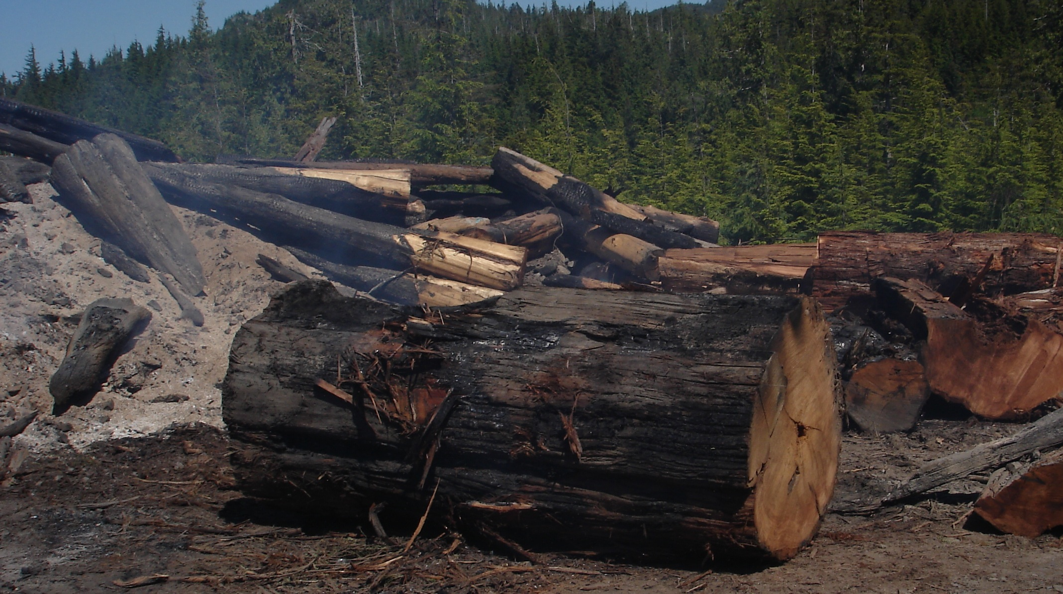 Wasting Wood